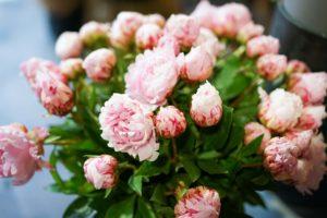 bouquet pivoine rose