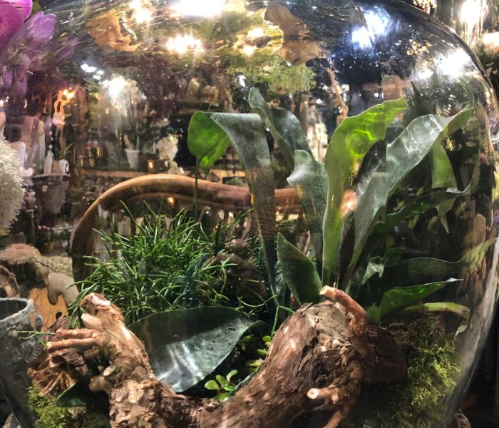 Terrariums de plantes : les vedettes du moment